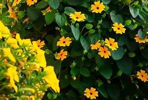Immergrüne Pflanzen Als Sichtschutz : kletterpflanzen als sichtschutz ~ Michelbontemps.com Haus und Dekorationen