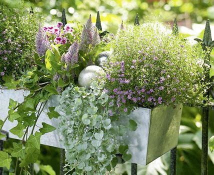 Hängende Blumen Für Balkonkästen by H 228 Ngende Gr 252 Npflanzen F 252 R Balkonk 228 Sten Pflanzen F 252 R