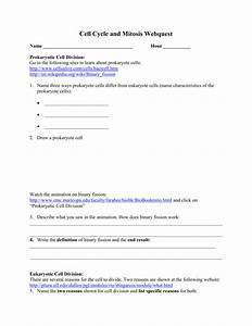 Cells Alive Cell Cycle Worksheet Answer Key