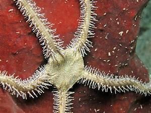 The 8 Phylum Of Invertebrate Animals
