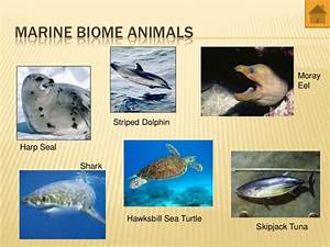 world biomes - animals and plants