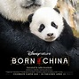 'Born in China' is more than a documentary | The Friday Flyer