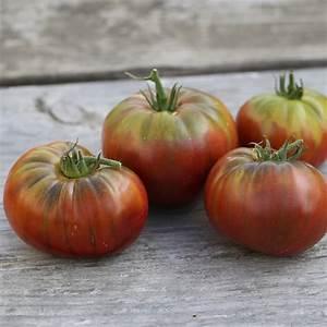 Tomate Noir De Crimée : tomate noire de crimee ab ferme de sainte marthe ~ Dailycaller-alerts.com Idées de Décoration