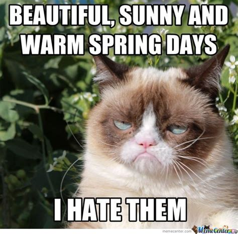 Spring Memes - grumpy cat theblackandolivechronicles