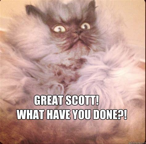 Shock Meme - shocked cat memes image memes at relatably com