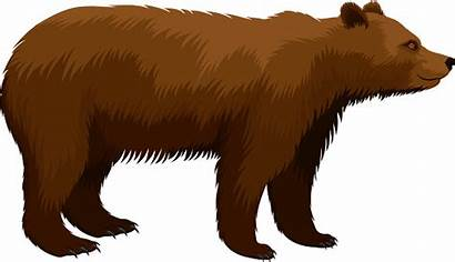 Bear Grizzly Brown Vector Illustration Clip Illustrations