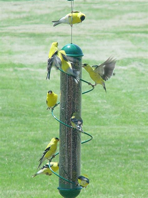 Bird Feeders For Yellow Finches Birdcage Design Ideas