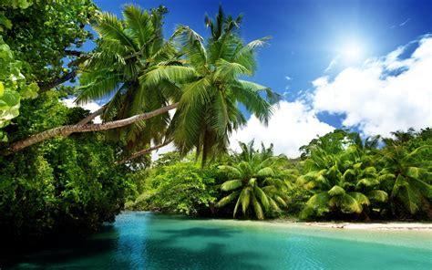 palm trees nature landscape wallpapers hd desktop