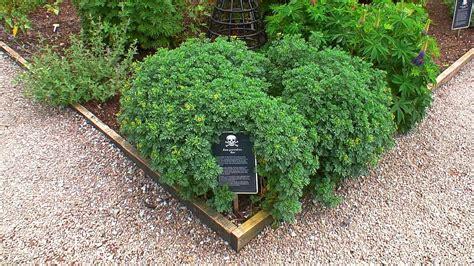 poison gardens the poison garden at blarney castle in ireland