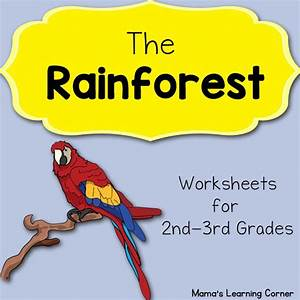 Elementary Rainforest Worksheets  U2013 Worksheets Samples