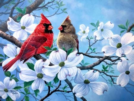 spring cardinals  abstract background wallpapers