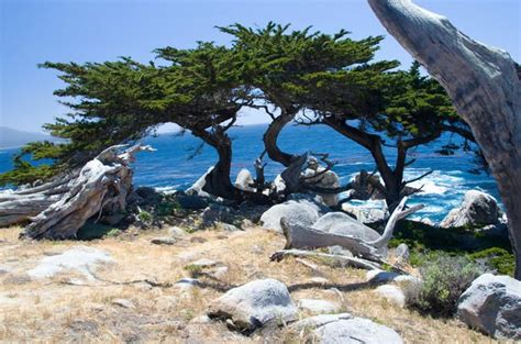 At about sunnyvale, take hwy 85 (another freeway, but through residential areas). 2-Day Monterey, Carmel and Pebble Beach Tour from San ...