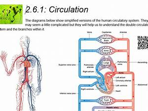 Aqa Gcse Biology  Trilogy  Lesson 19 Blood Vessels