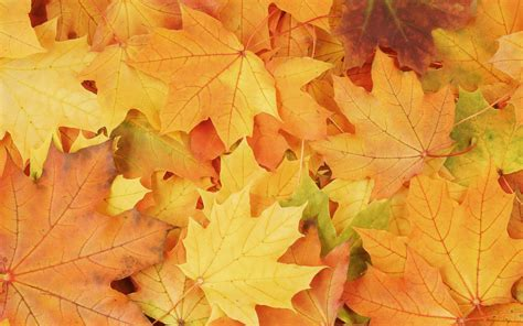 Fall Leaf Wallpaper - WallpaperSafari