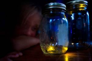 Firefly.org | Firefly & Lightning Bug Facts, Pictures ...