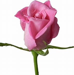 BEST GREETINGS: Beautiful Greetings with Single Red rose ...
