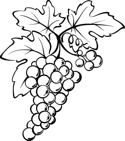 drawing grapes coloring pages color luna