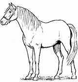 Horse Drawing Standing Horses Drawings Realistic Coloring Printable Sketch Template Animals Pixgood Credit Larger Stuffed Drawn sketch template