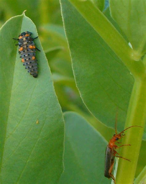natural garden pest