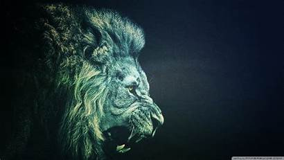 Wallpapers Lion 1080p