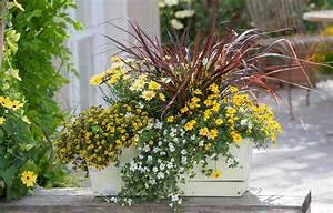 Plantes Et Fleurs Pour Balcon : fleurs d t pour jardini re fashion designs ~ Premium-room.com Idées de Décoration