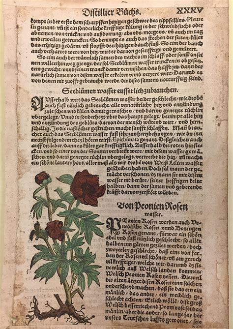 rhiannon knol the origins of flavored waters the getty iris