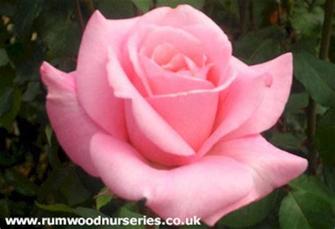 same day flowers catalogue rumwood nurseries and garden centre