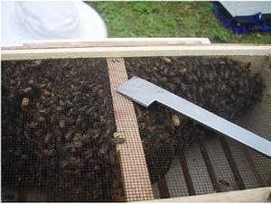 Your Hive Installation  A Pictorial Guide To Installing A Bee Package