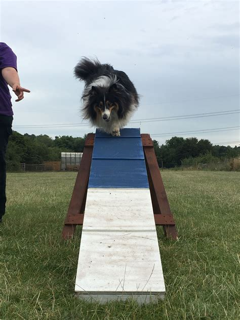 Pin by Positive Training For Canines on Agility | Photo ...