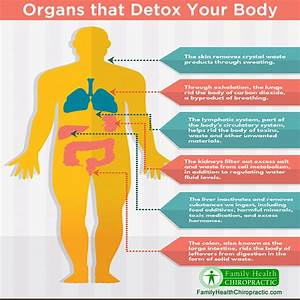 Organs That Detox Your Body