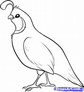 How to Draw a Quail, Step by Step, forest animals, Animals ...