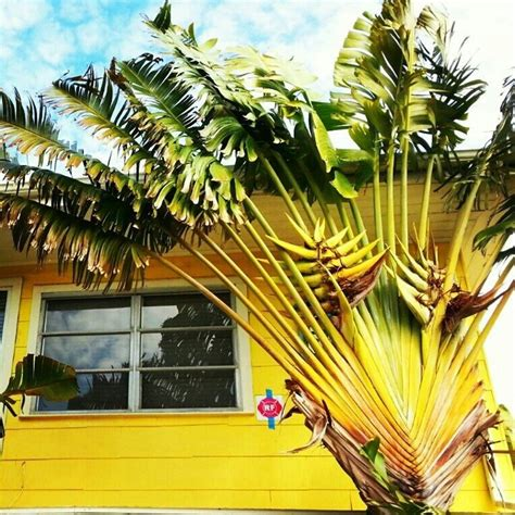 17 best images about florida plants on trees