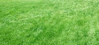 Techniques For Overseeding Lawns