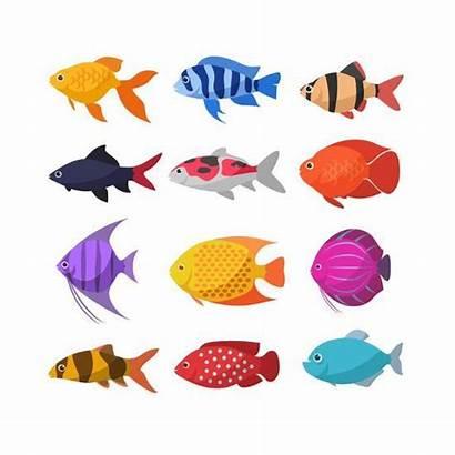 Fish Cartoon Fishes Ornamental Aquarium River Freshwater