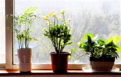 Feng Shui Q & A  Plants In The Bedroom  The Tao Of Dana