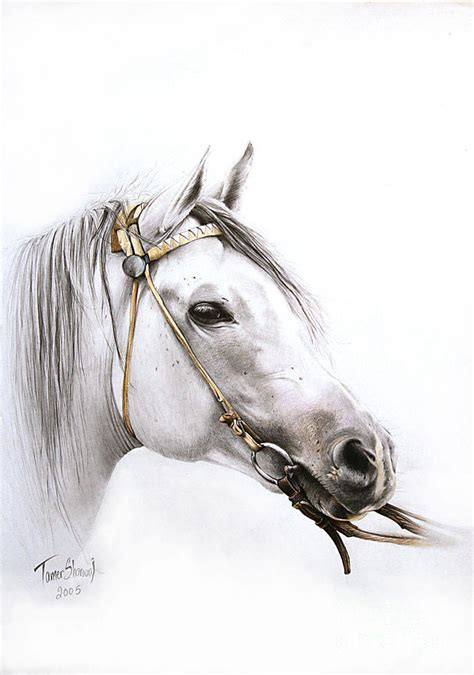 horse portrait drawing  tamer  cindy elsharouni