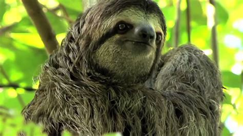 Sloth Slowest Animals in the World