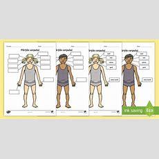 Părțile Corpului și Cele 5 Simțuri Fișă De Lucru Corpul