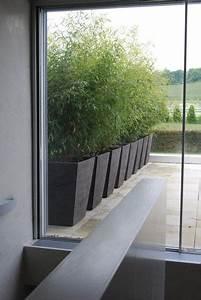 Bambus In Kübeln : bambus r pinterest bambus g rten und garten accessoires ~ Michelbontemps.com Haus und Dekorationen