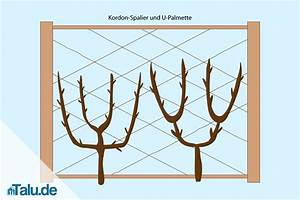Spalierobst Gerüst Selber Bauen : apfelbaum als spindel und spalier in form schneiden ~ Eleganceandgraceweddings.com Haus und Dekorationen
