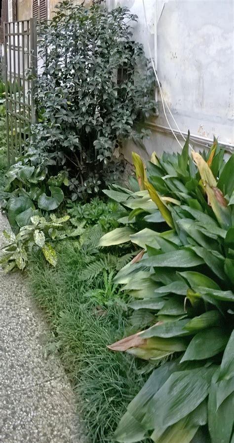 al giardino segreto giardino segreto all ombra dei palazzi