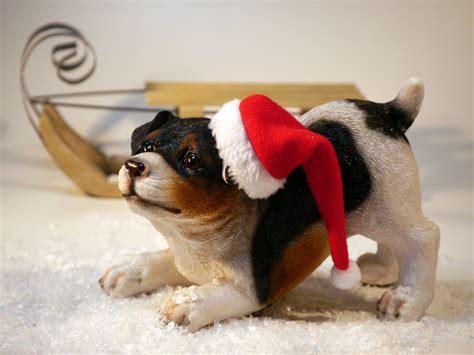 Free Stock P O Of Adorable Animal Blur