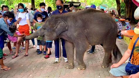 เที่ยวสวนเสือศรีราชา จ.ชลบุรี #GGNN - YouTube