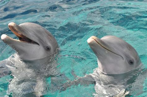 Glass Bottom Boat Tours Destin Fl by Glass Bottom Boat Dolphin Cruise Picture Of Boogies