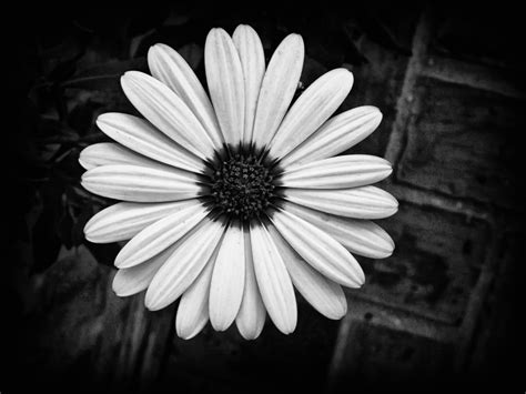 ccd blackwhite floral changing color with photoshop dhs computer graphics