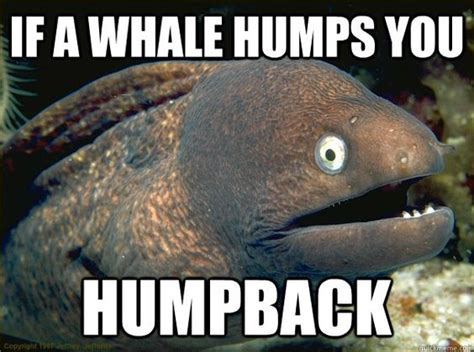 Whale Meme - humpback whale whales and memes on pinterest