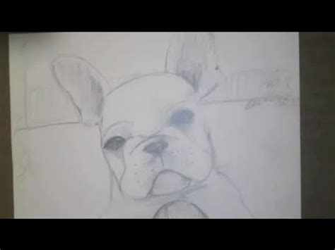 draw  french bulldog youtube