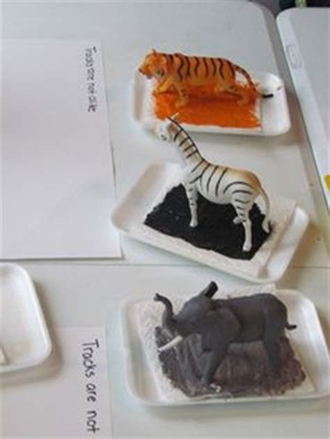 eyfs animals topic images preschool crafts