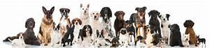 Hunde Größe Berechnen : hundeversicherung im vergleich preis online berechnen g p ~ Themetempest.com Abrechnung