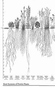 Root / Roots - Biocyclopedia.com